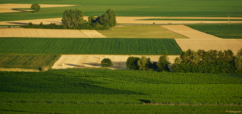 DSC07966(plaine depuis le Bollenberg)