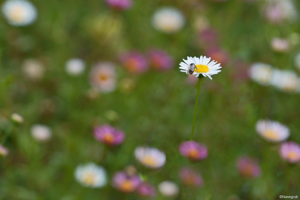 DSC00005 fleurs