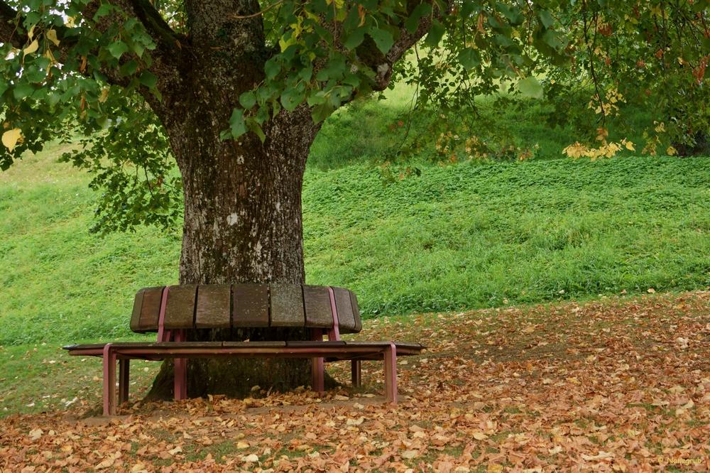 DSC01516 arbre palabres