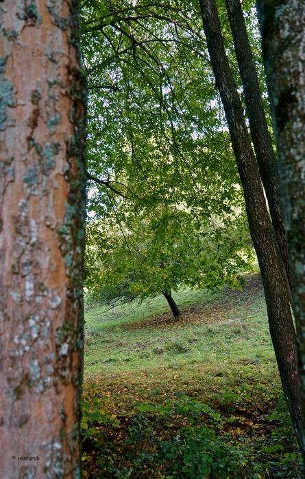 DSC00569 L'arbre