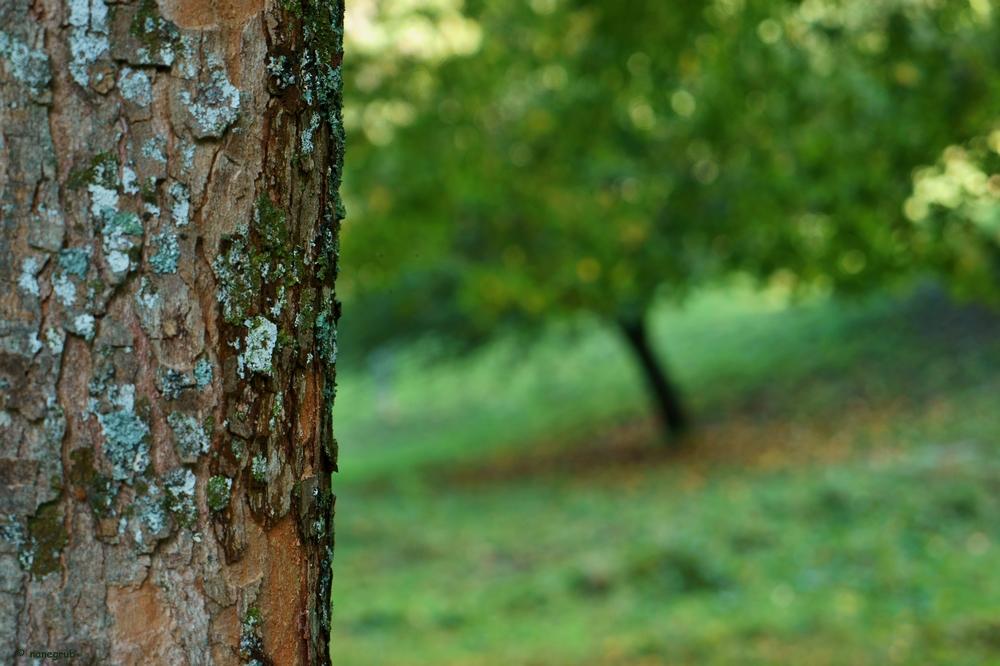 DSC00571 (arbre)