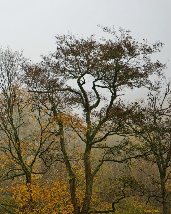 DSC00417 arbres fantomes