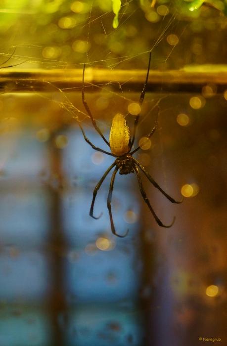 l'araignee DSC02922 eclatant