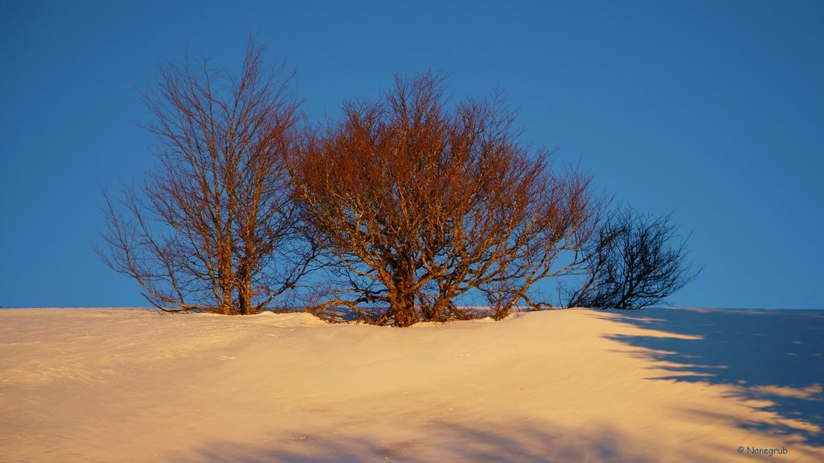 Arbres Markstein Coucher de soleil Neige DSC00650