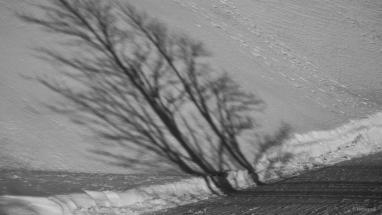 Arbres ombres Markstein DSC00627