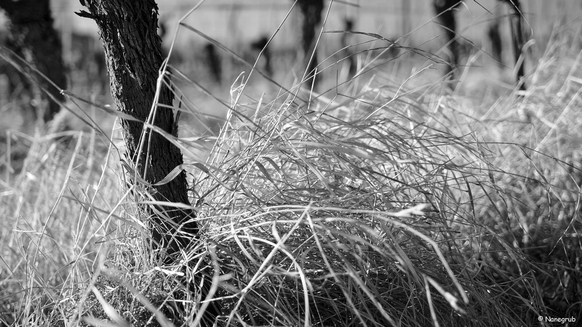 Cheveux au vent - DSC01068