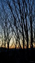 Rideau d'arbres - DSC00751