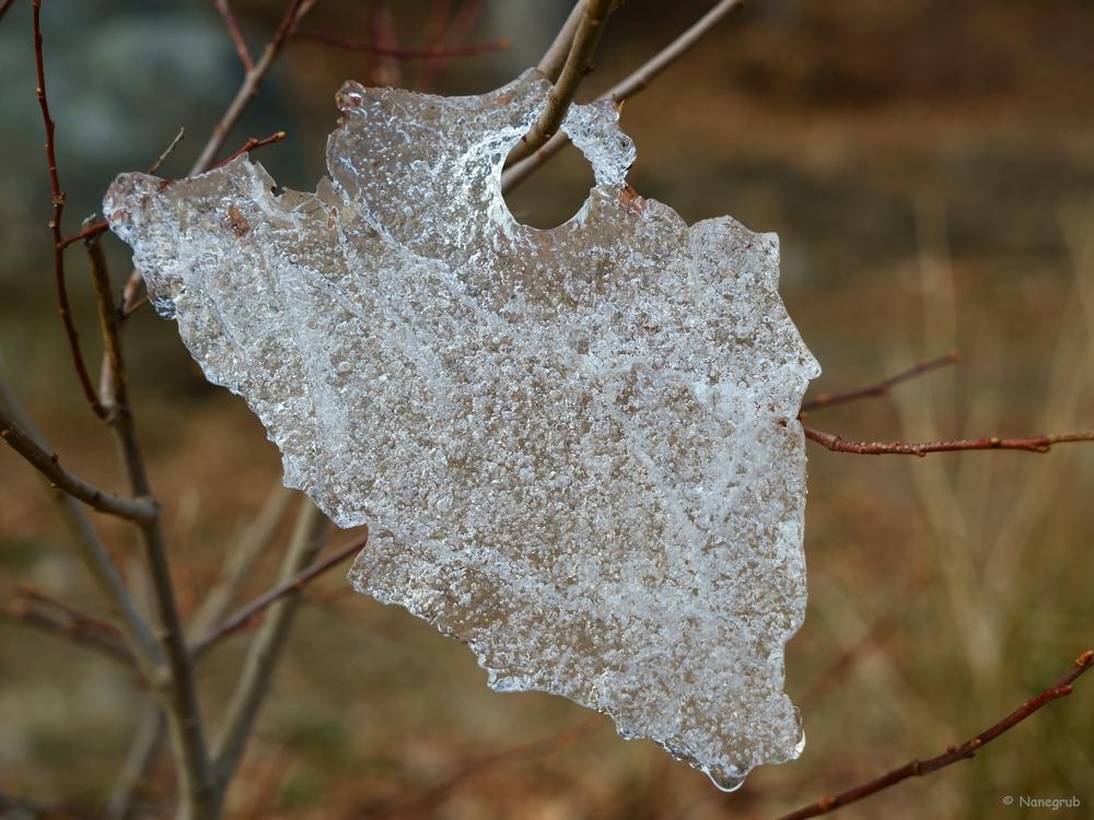 Lambeaux d'hiver - DSC02135