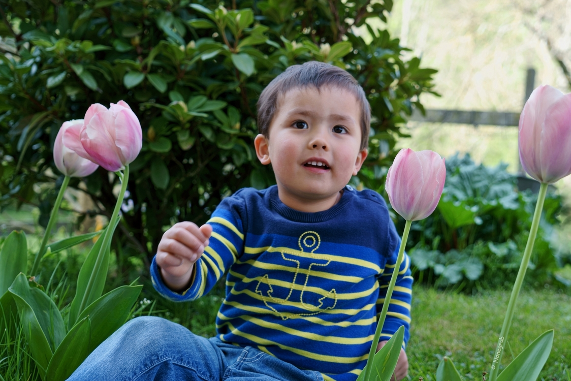 L'enfant et les tulipes - DSC04080