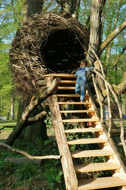 maison dans arbre - DSC03993