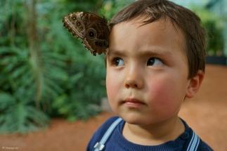 le papillon - DSC05903