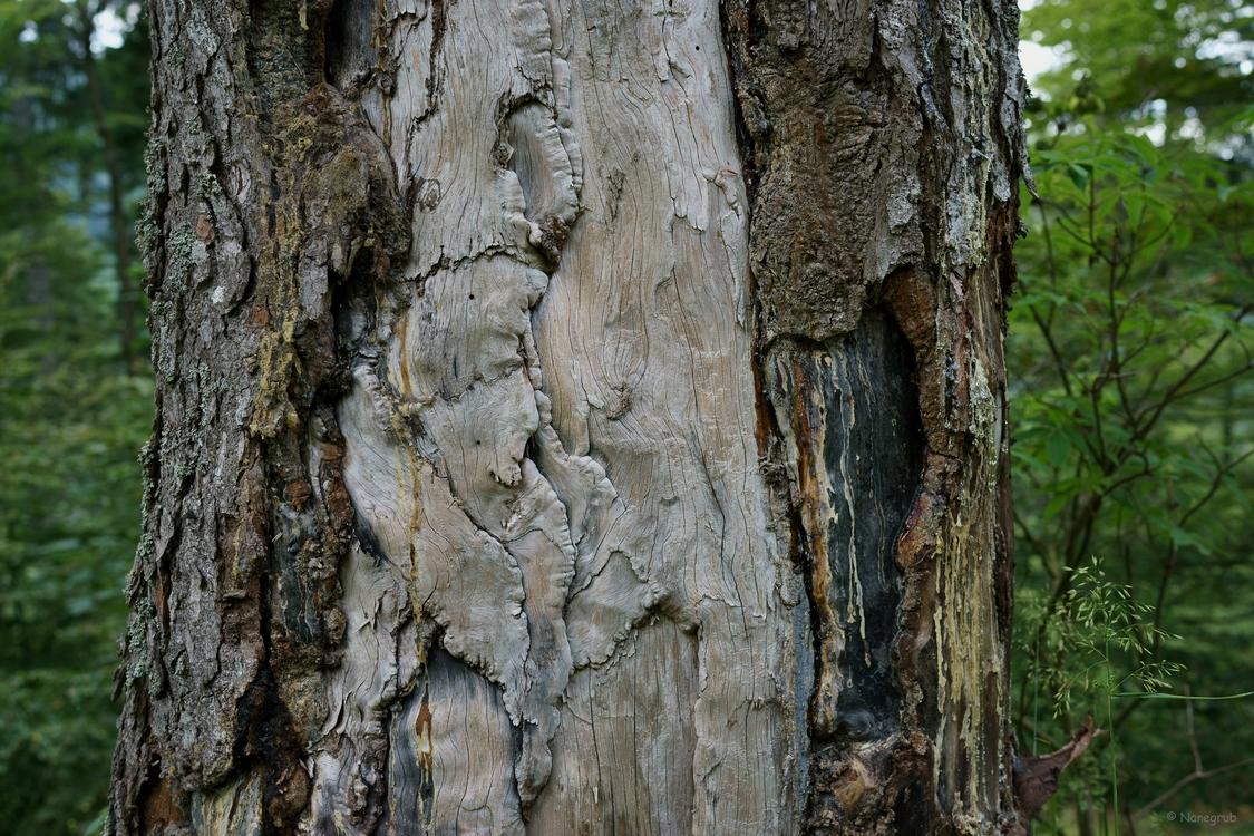 l'arbre - DSC07462